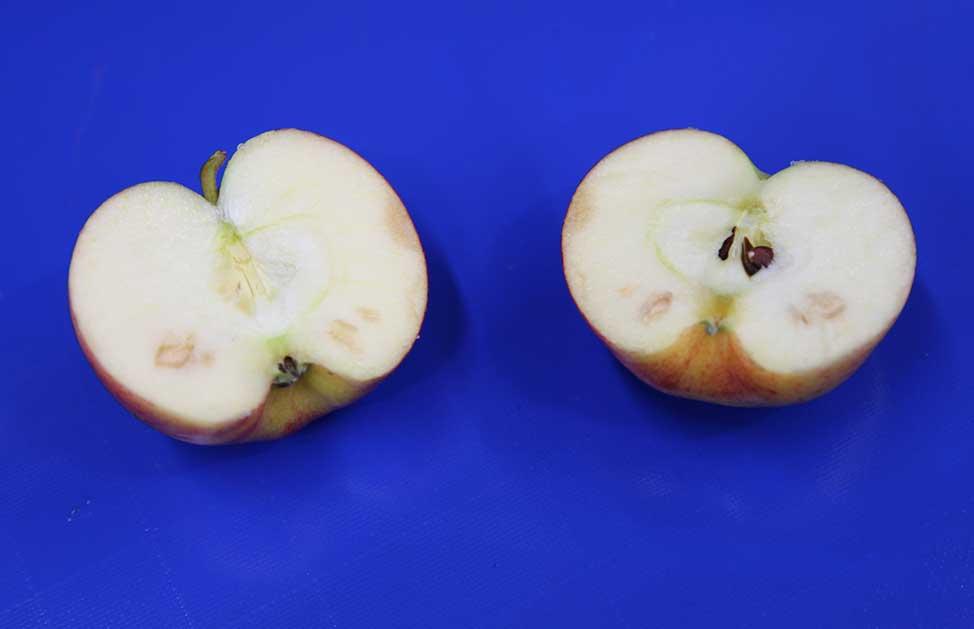 GP Graders advances apple tech