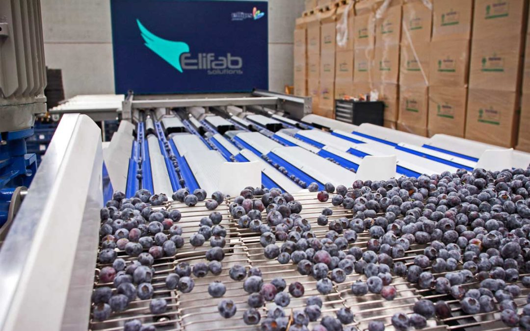 Elifab presents the new blue berries machine.